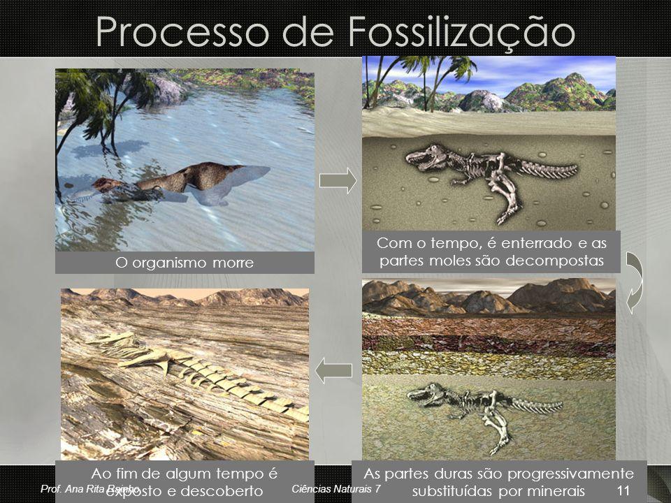 Processo de Fossilização O organismo morre Com o tempo, é enterrado e as partes moles são decompostas As partes duras são progressivamente substituída