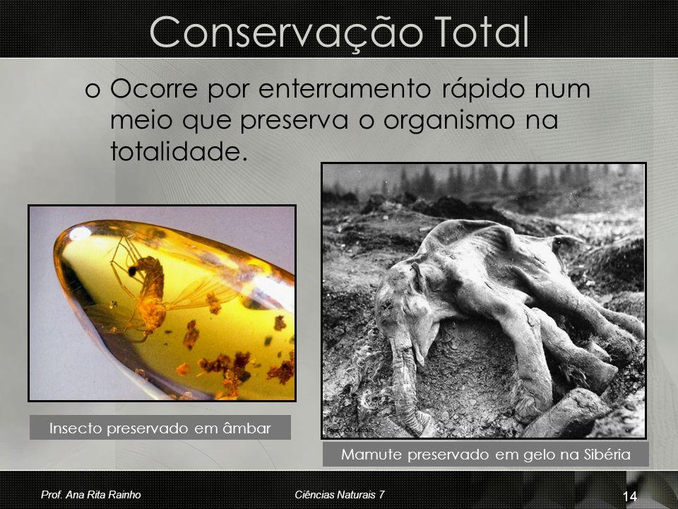 Conservação Total oOoOcorre por enterramento rápido num meio que preserva o organismo na totalidade. Insecto preservado em âmbar Mamute preservado em