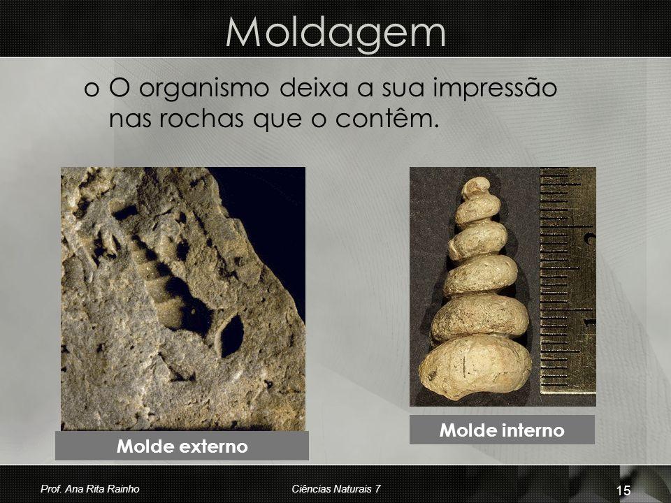 Moldagem oOoO organismo deixa a sua impressão nas rochas que o contêm. Molde externo Molde interno Prof. Ana Rita Rainho 15 Ciências Naturais 7
