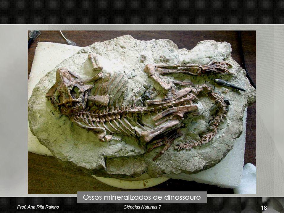 Ossos mineralizados de dinossauro Prof. Ana Rita Rainho 18 Ciências Naturais 7