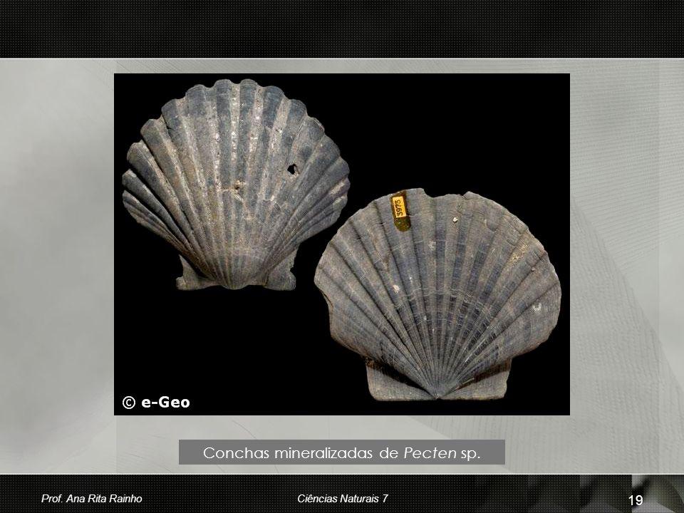 Conchas mineralizadas de Pecten sp. Prof. Ana Rita Rainho 19 Ciências Naturais 7
