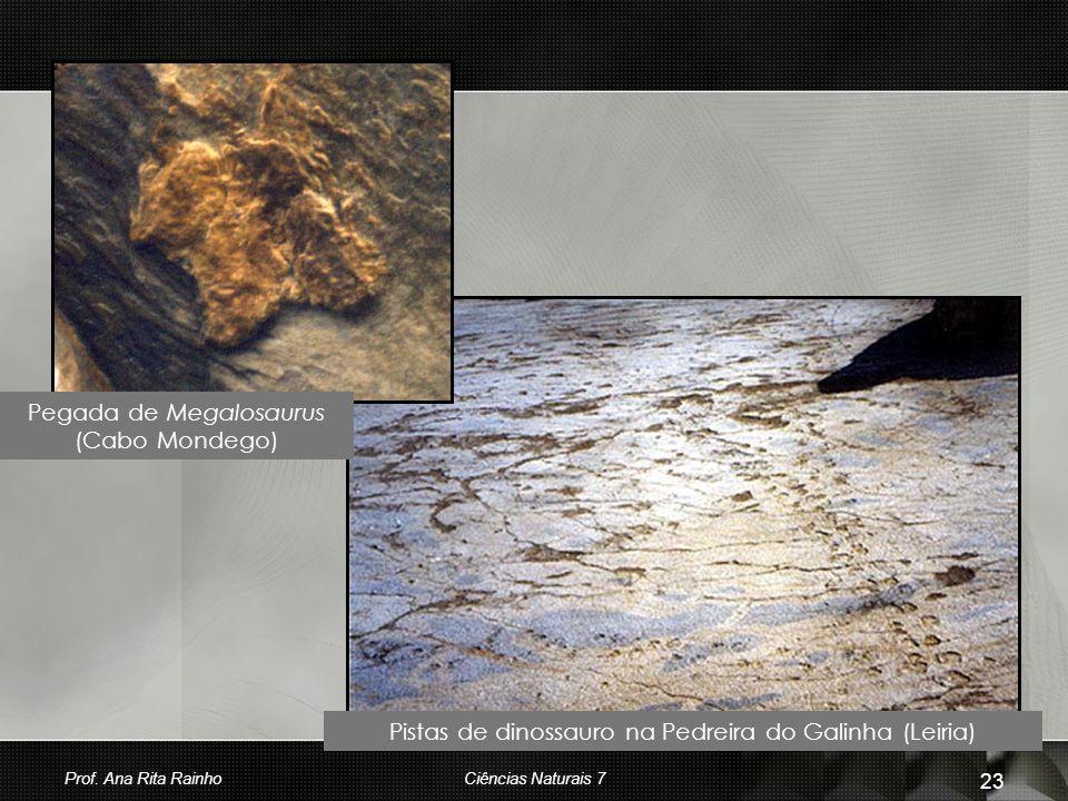 Pegada de Megalosaurus (Cabo Mondego) Pistas de dinossauro na Pedreira do Galinha (Leiria) Prof. Ana Rita Rainho 23 Ciências Naturais 7