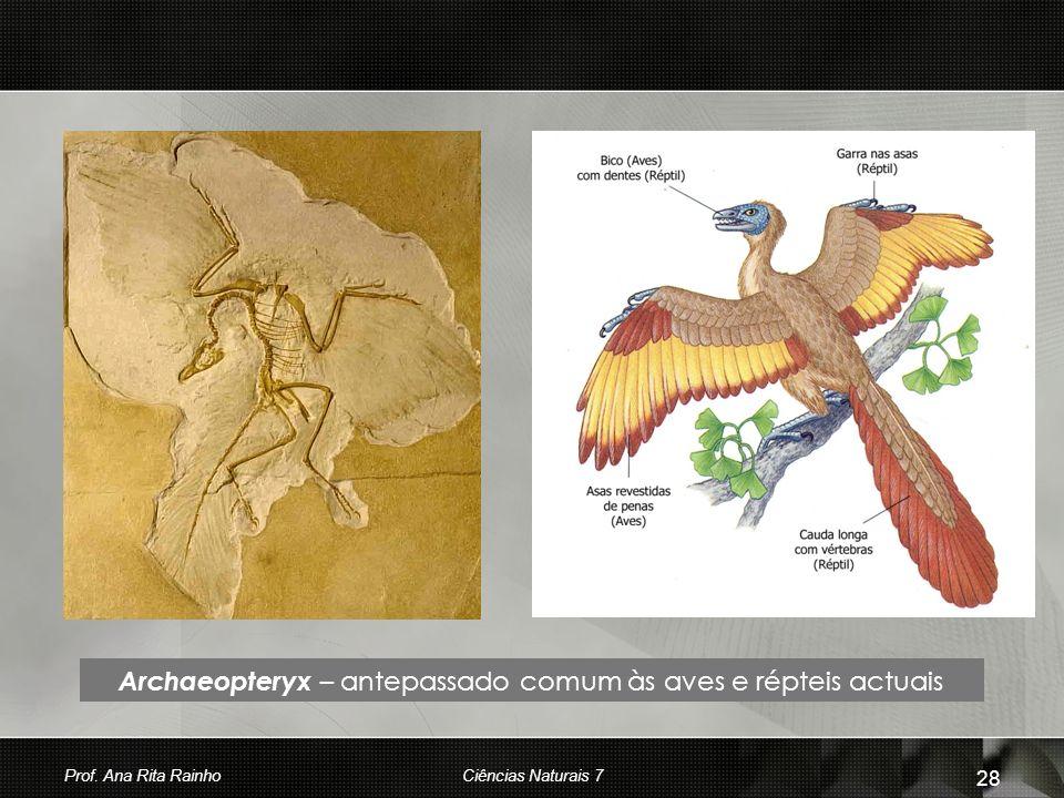 Archaeopteryx – antepassado comum às aves e répteis actuais Prof. Ana Rita Rainho 28 Ciências Naturais 7