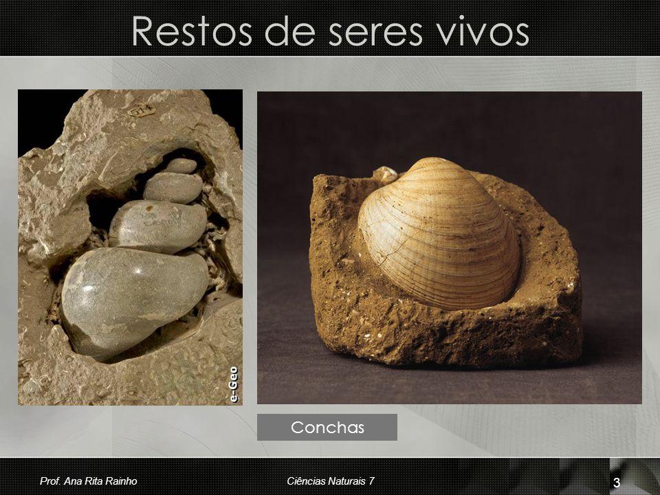 Restos de seres vivos Conchas Prof. Ana Rita Rainho 3 Ciências Naturais 7