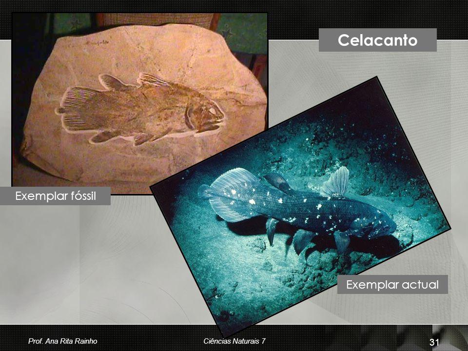 Celacanto Exemplar actual Exemplar fóssil Prof. Ana Rita Rainho 31 Ciências Naturais 7