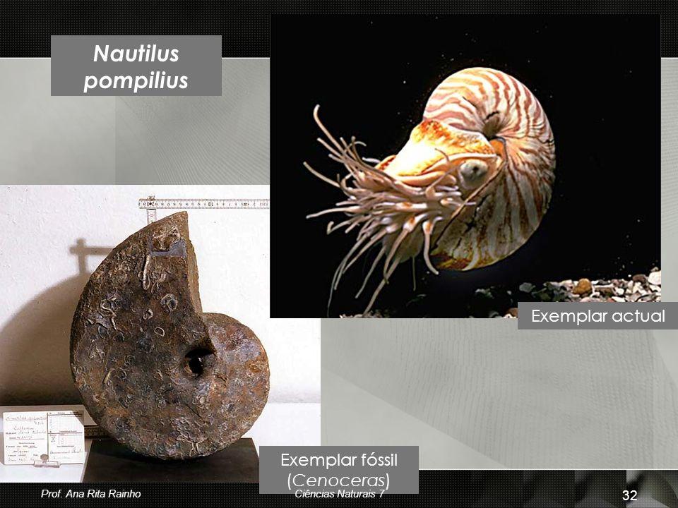 Nautilus pompilius Exemplar fóssil (Cenoceras) Exemplar actual Prof. Ana Rita Rainho 32 Ciências Naturais 7