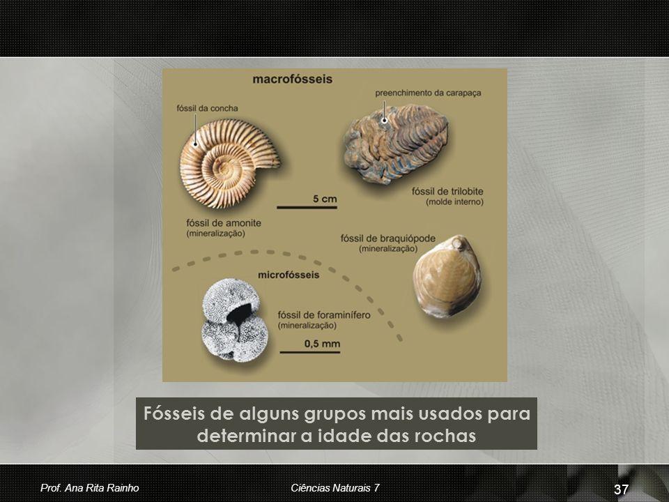 Fósseis de alguns grupos mais usados para determinar a idade das rochas Prof. Ana Rita RainhoCiências Naturais 7 37