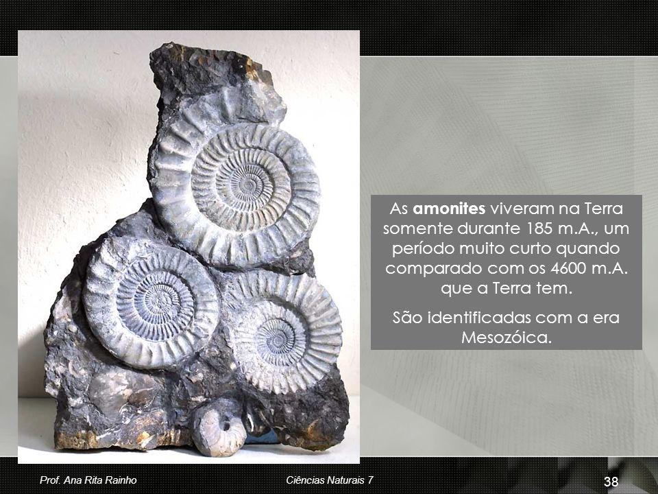 As amonites viveram na Terra somente durante 185 m.A., um período muito curto quando comparado com os 4600 m.A. que a Terra tem. São identificadas com
