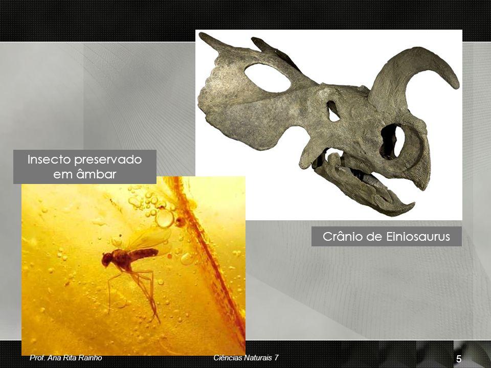 Insecto preservado em âmbar Crânio de Einiosaurus Prof. Ana Rita Rainho 5 Ciências Naturais 7