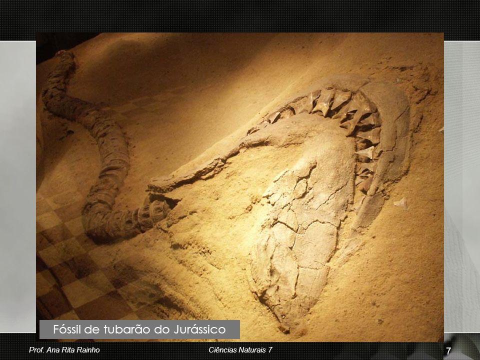 Fóssil de tubarão do Jurássico Prof. Ana Rita Rainho 7 Ciências Naturais 7