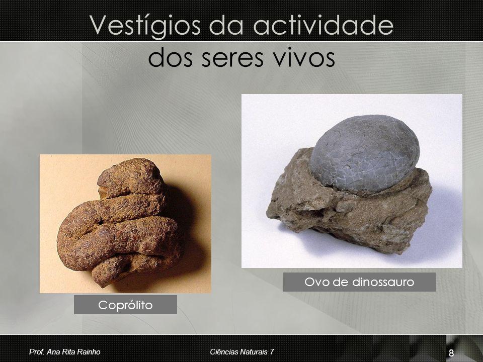 Vestígios da actividade dos seres vivos Coprólito Ovo de dinossauro Prof. Ana Rita Rainho 8 Ciências Naturais 7