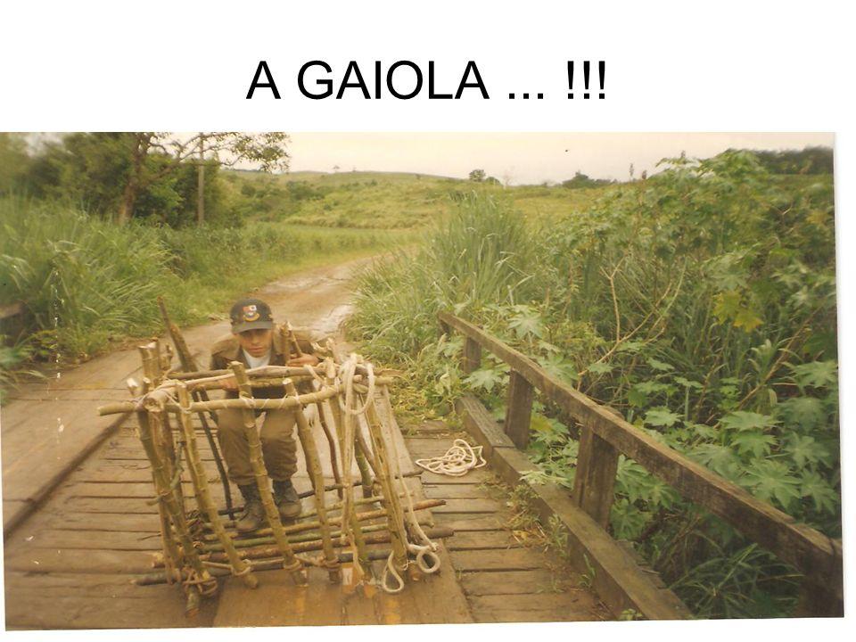 A GAIOLA... !!!