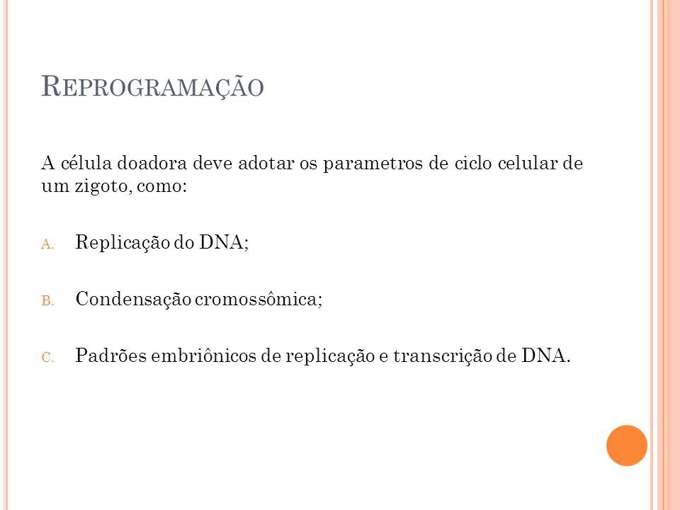R EPROGRAMAÇÃO A célula doadora deve adotar os parametros de ciclo celular de um zigoto, como: A. Replicação do DNA; B. Condensação cromossômica; C. P