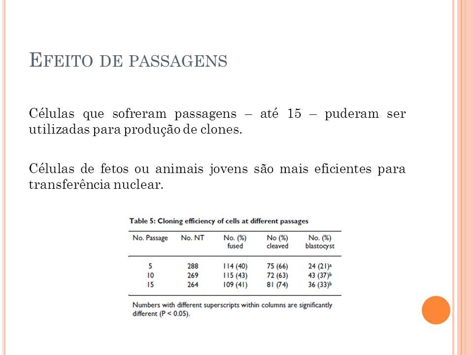 E FEITO DE PASSAGENS Células que sofreram passagens – até 15 – puderam ser utilizadas para produção de clones.