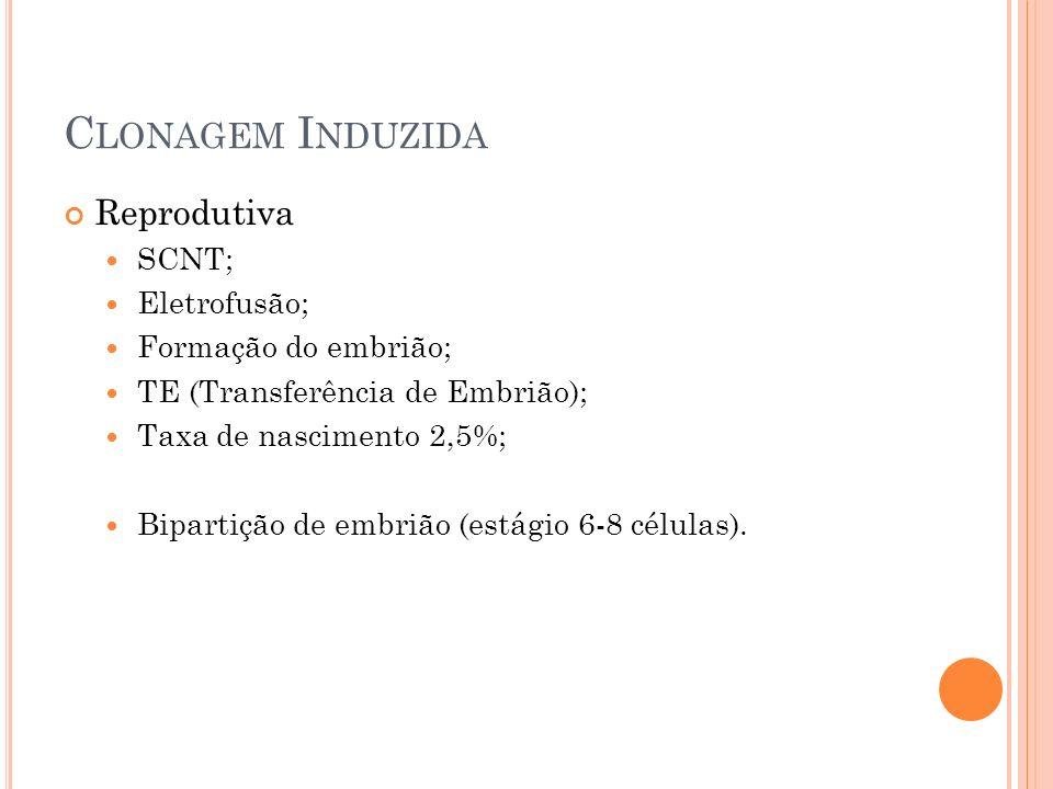 C LONAGEM I NDUZIDA Reprodutiva SCNT; Eletrofusão; Formação do embrião; TE (Transferência de Embrião); Taxa de nascimento 2,5%; Bipartição de embrião (estágio 6-8 células).