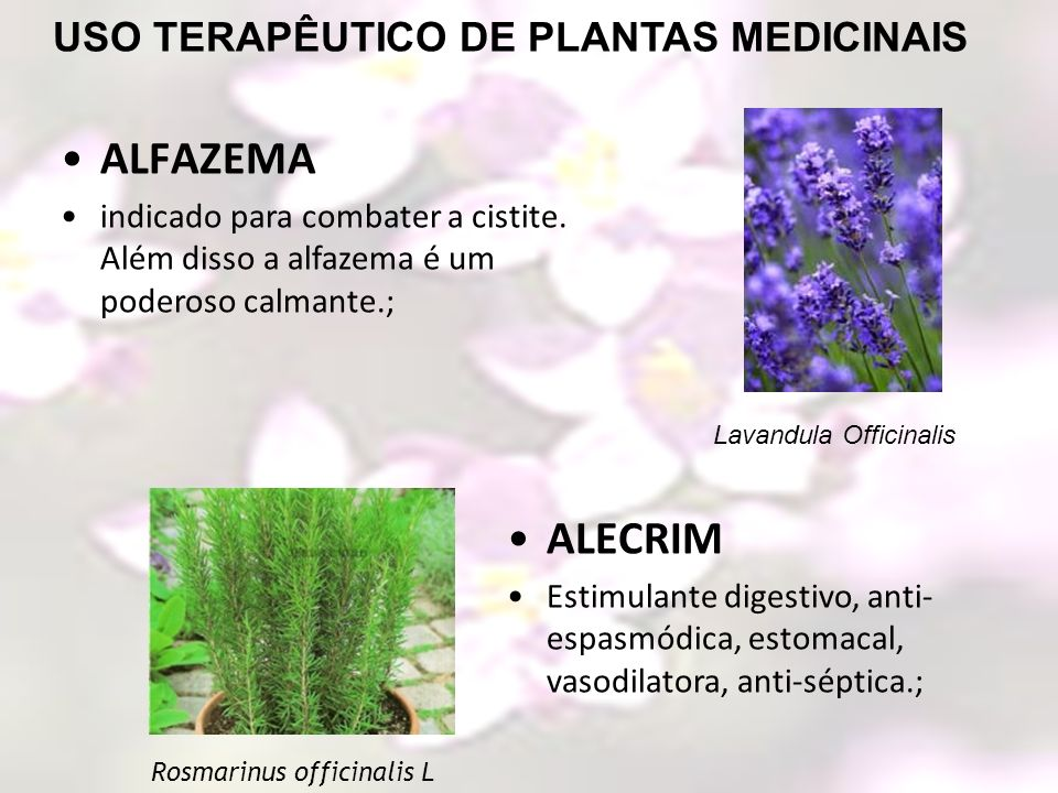 USO TERAPÊUTICO DE PLANTAS MEDICINAIS ALECRIM Estimulante digestivo, anti- espasmódica, estomacal, vasodilatora, anti-séptica.; ALFAZEMA indicado para