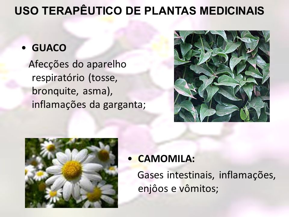 CAMOMILA: Gases intestinais, inflamações, enjôos e vômitos; GUACO Afecções do aparelho respiratório (tosse, bronquite, asma), inflamações da garganta;