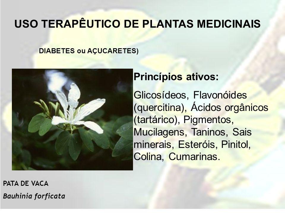 USO TERAPÊUTICO DE PLANTAS MEDICINAIS DIABETES ou AÇUCARETES) Princípios ativos: Glicosídeos, Flavonóides (quercitina), Ácidos orgânicos (tartárico),
