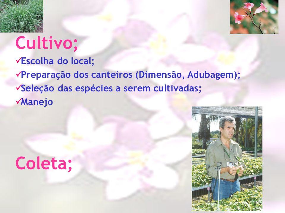Cultivo; Escolha do local; Preparação dos canteiros (Dimensão, Adubagem); Seleção das espécies a serem cultivadas; Manejo Coleta;