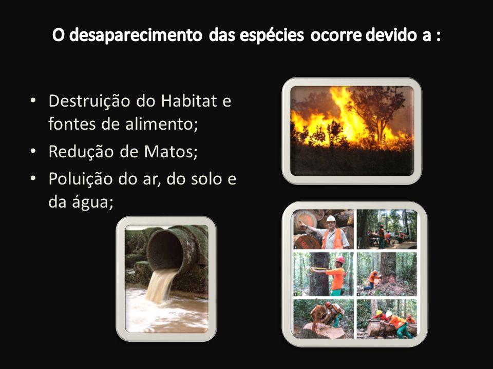 Destruição do Habitat e fontes de alimento; Redução de Matos; Poluição do ar, do solo e da água;