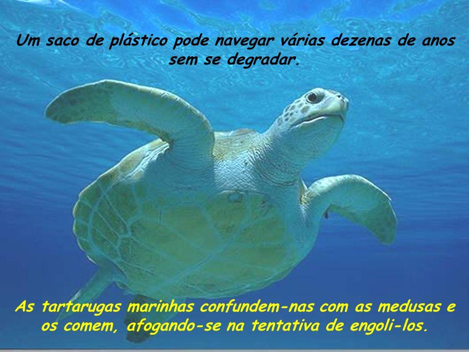 As tartarugas marinhas confundem-nas com as medusas e os comem, afogando-se na tentativa de engoli-los.
