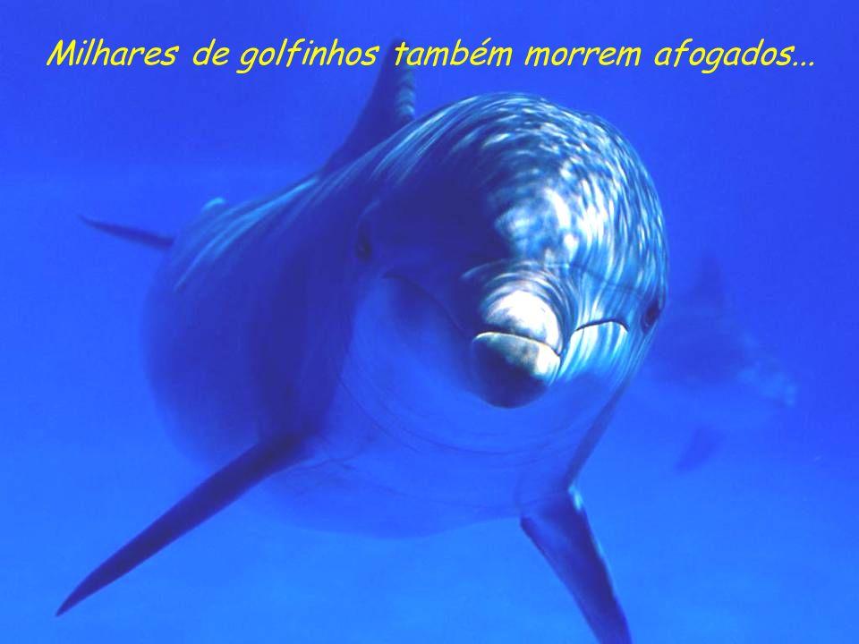 Milhares de golfinhos também morrem afogados...