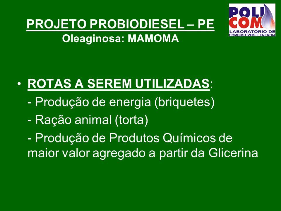 PROJETO PROBIODIESEL – PE Oleaginosa: MAMOMA ROTAS A SEREM UTILIZADAS: - Produção de energia (briquetes) - Ração animal (torta) - Produção de Produtos Químicos de maior valor agregado a partir da Glicerina