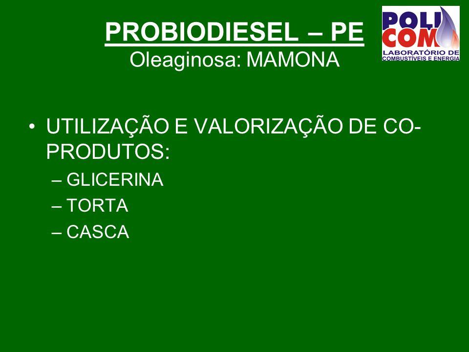 PROBIODIESEL – PE Oleaginosa: MAMONA UTILIZAÇÃO E VALORIZAÇÃO DE CO- PRODUTOS: –GLICERINA –TORTA –CASCA
