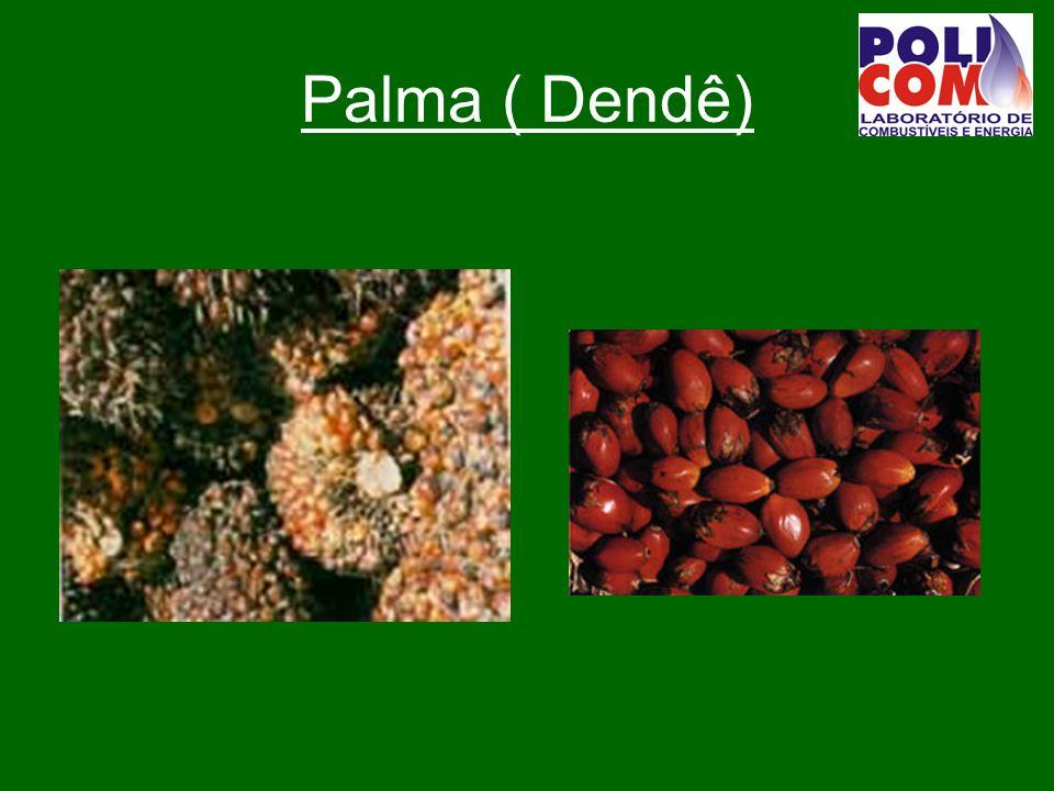 Palma ( Dendê)