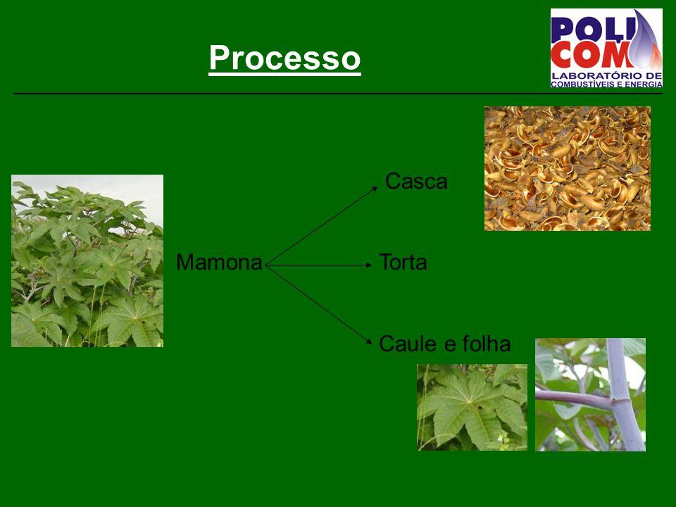 Processo Casca MamonaTorta Caule e folha