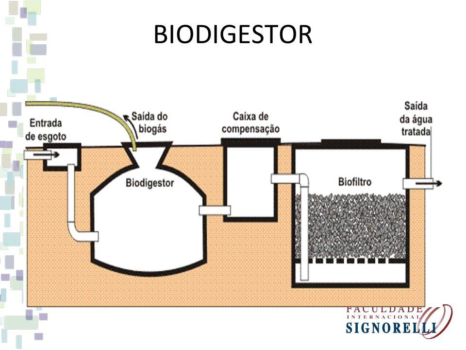 FONTES DE ENERGIA CONVENCIONAIS – BIOMASSA FONTE MATÉRIA ORGÂNICA DECOMPOSTA EM CALDEIRAS OU EM BIODIGESTORES. USO AQUECIMENTO, PRODUÇÃO DE ENERGIA EL