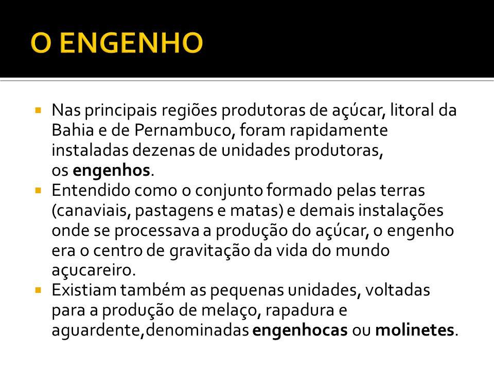 Nas principais regiões produtoras de açúcar, litoral da Bahia e de Pernambuco, foram rapidamente instaladas dezenas de unidades produtoras, os engenhos.