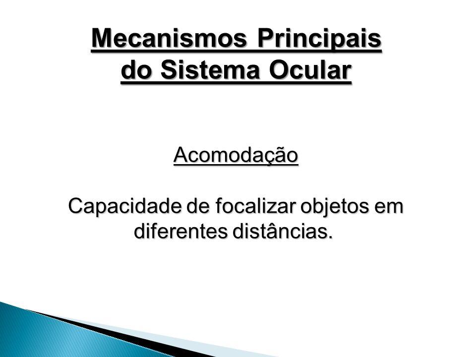 Acomodação Capacidade de focalizar objetos em diferentes distâncias. Capacidade de focalizar objetos em diferentes distâncias. Mecanismos Principais d
