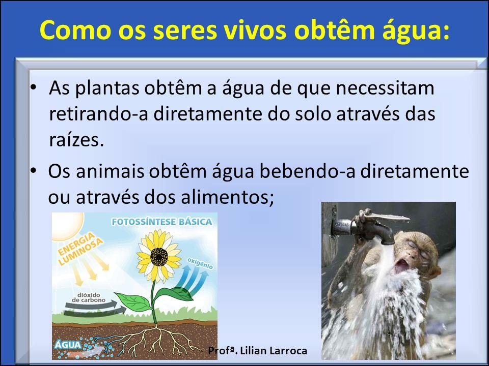 Como os seres vivos obtêm água: As plantas obtêm a água de que necessitam retirando-a diretamente do solo através das raízes. Os animais obtêm água be