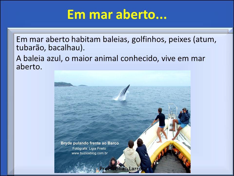 Em mar aberto... Em mar aberto habitam baleias, golfinhos, peixes (atum, tubarão, bacalhau). A baleia azul, o maior animal conhecido, vive em mar aber