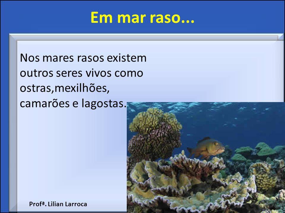 Em mar raso... Nos mares rasos existem outros seres vivos como ostras,mexilhões, camarões e lagostas. Profª. Lilian Larroca
