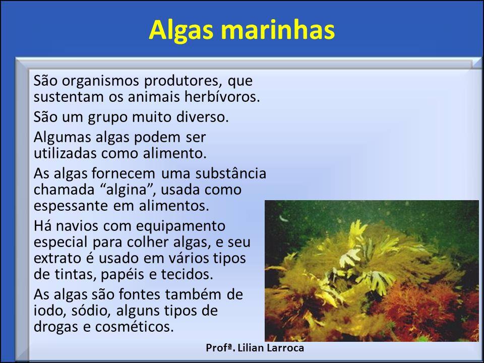 Algas marinhas São organismos produtores, que sustentam os animais herbívoros. São um grupo muito diverso. Algumas algas podem ser utilizadas como ali