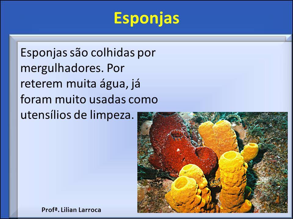 Esponjas Esponjas são colhidas por mergulhadores. Por reterem muita água, já foram muito usadas como utensílios de limpeza. Profª. Lilian Larroca