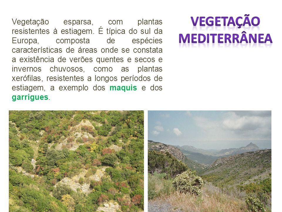 Vegetação esparsa, com plantas resistentes à estiagem.