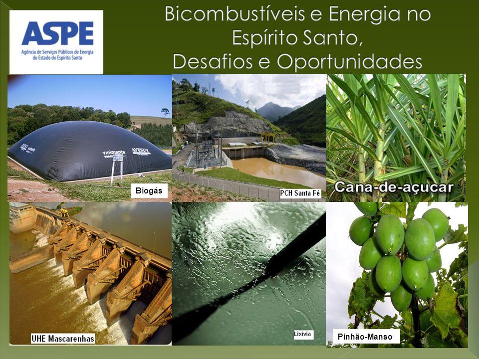 Pinhão-Manso Biogás