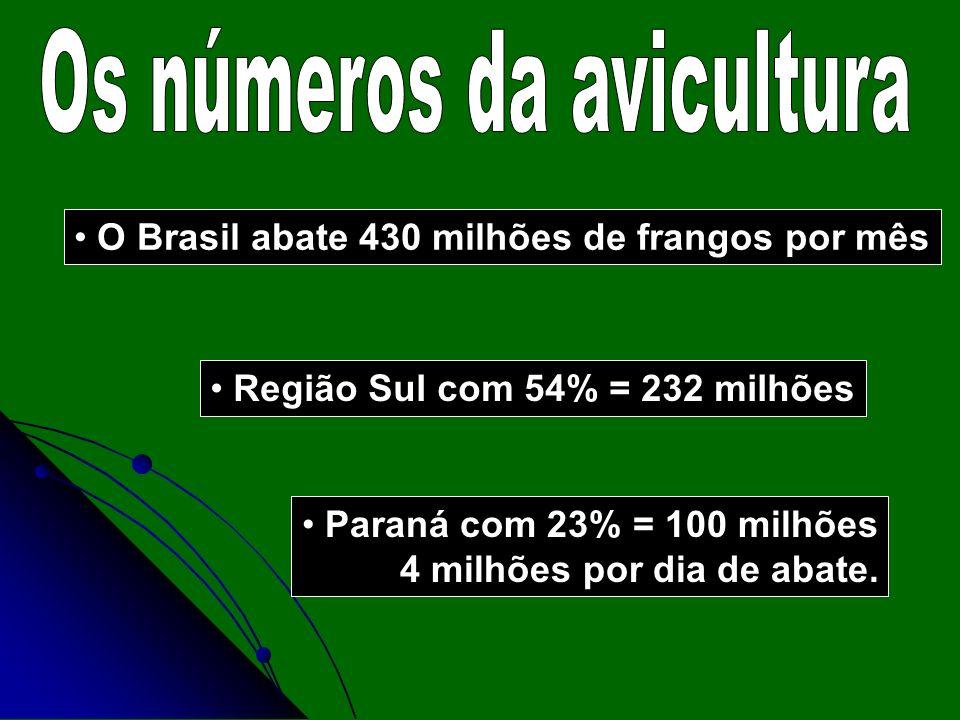 O Brasil abate 430 milhões de frangos por mês Região Sul com 54% = 232 milhões Paraná com 23% = 100 milhões 4 milhões por dia de abate.
