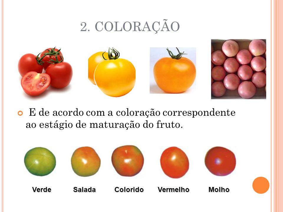 2.COLORAÇÃO E de acordo com a coloração correspondente ao estágio de maturação do fruto.