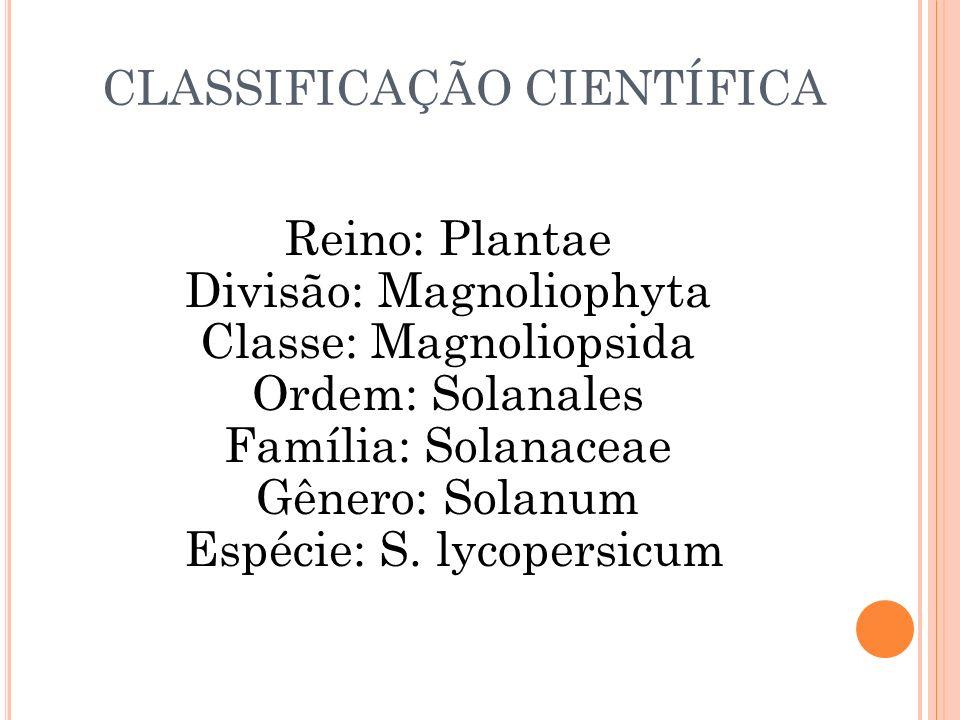 CLASSIFICAÇÃO CIENTÍFICA Reino: Plantae Divisão: Magnoliophyta Classe: Magnoliopsida Ordem: Solanales Família: Solanaceae Gênero: Solanum Espécie: S.
