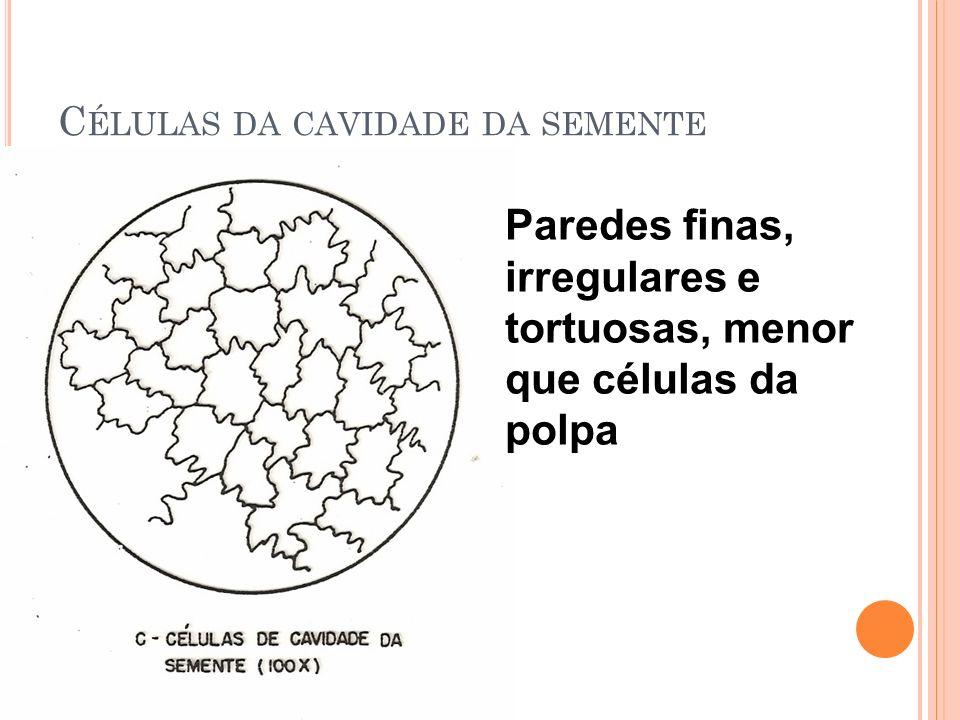 C ÉLULAS DA CAVIDADE DA SEMENTE Paredes finas, irregulares e tortuosas, menor que células da polpa