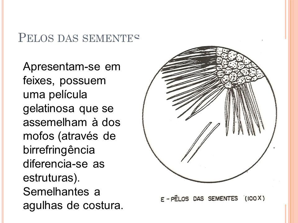 P ELOS DAS SEMENTES Apresentam-se em feixes, possuem uma película gelatinosa que se assemelham à dos mofos (através de birrefringência diferencia-se as estruturas).