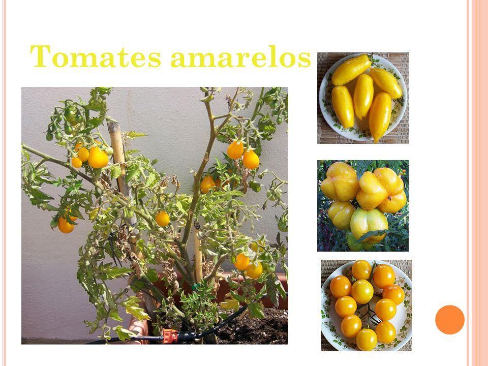 M OLHO DE TOMATE A formulação básica do molho de tomate consiste na adição dos seguintes ingredientes nas quantidades correspondentes: 93% de tomate fresco; 0,5% de sal refinado; 0,2% de açúcar cristal; 5% de cebolas preparadas; 0,04% alho em pó; 0,02% de salsa em flocos; 1,2% de óleo de soja refinado; 0,02% de glutamato monossódico.
