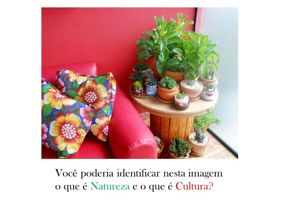 Você poderia identificar nesta imagem o que é Natureza e o que é Cultura?