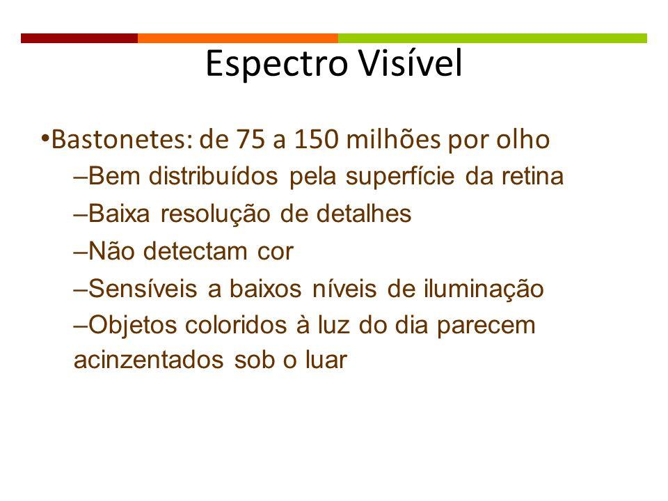 Espectro Visível Bastonetes: de 75 a 150 milhões por olho –Bem distribuídos pela superfície da retina –Baixa resolução de detalhes –Não detectam cor –