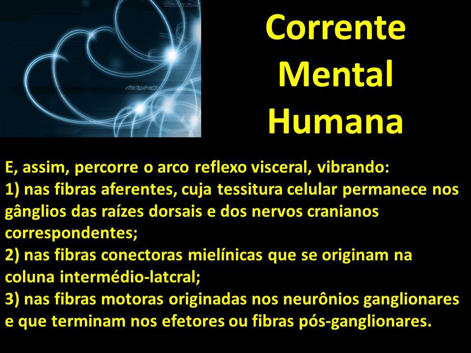 Corrente Mental Humana E, assim, percorre o arco reflexo visceral, vibrando: 1) nas fibras aferentes, cuja tessitura celular permanece nos gânglios da