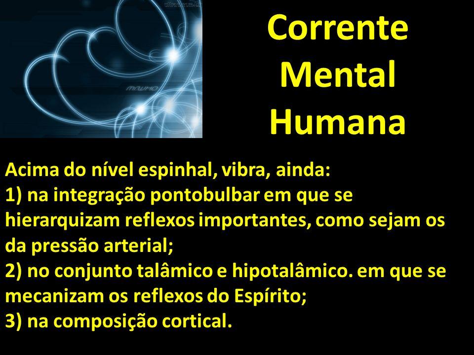 Corrente Mental Humana Acima do nível espinhal, vibra, ainda: 1) na integração pontobulbar em que se hierarquizam reflexos importantes, como sejam os
